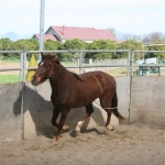 checking-rope-work-at-the-trot