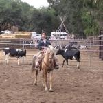 cows-paragraph