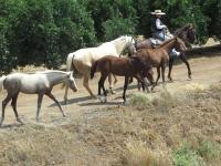 Foals-on-trail