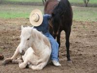 Pasture massage