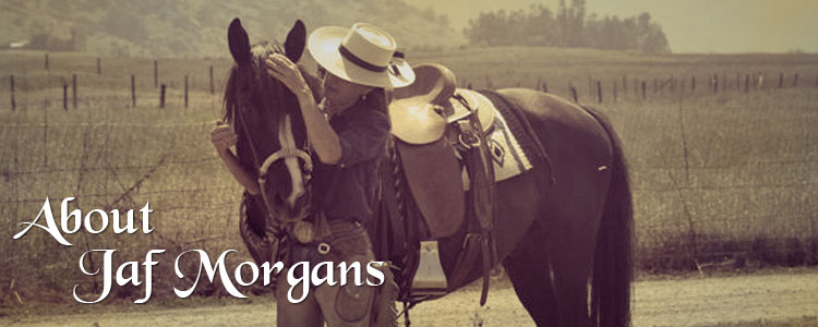 About JaF Morgan Stock Horses